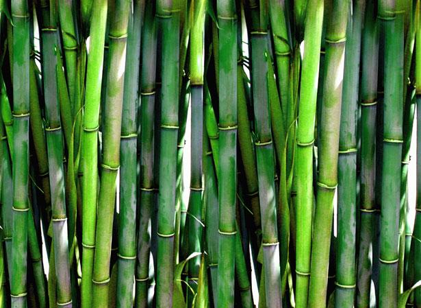 Польза или вред: ТОП-10 растений для дома с сильной энергетикой