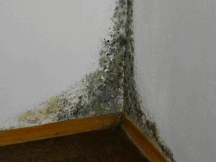 Антигрибковая (антисептическая) грунтовка – средство для борьбы с грибком и плесенью