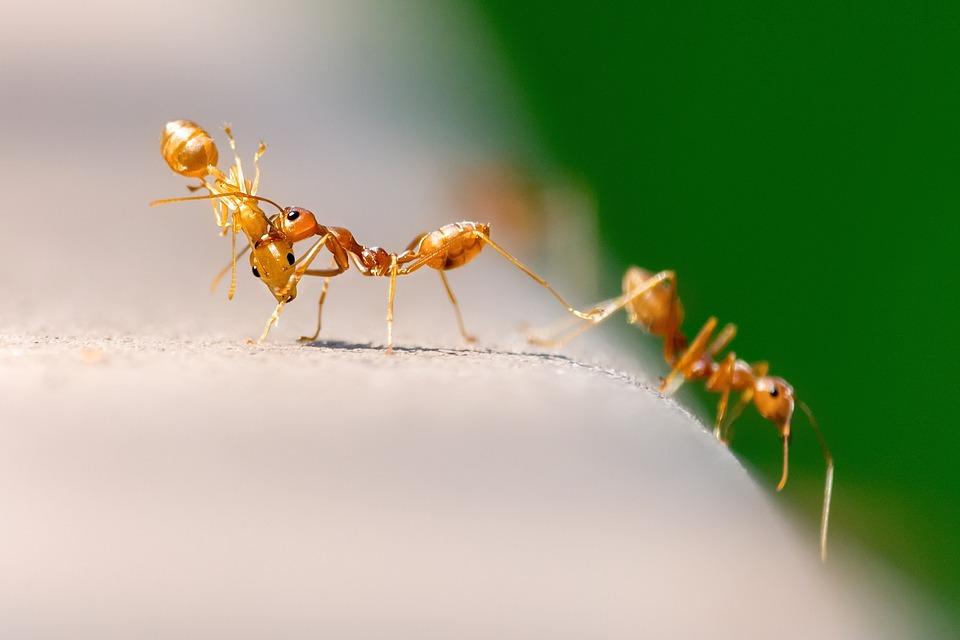 Крысы и тараканы: Как выселить из квартиры противных вредителей