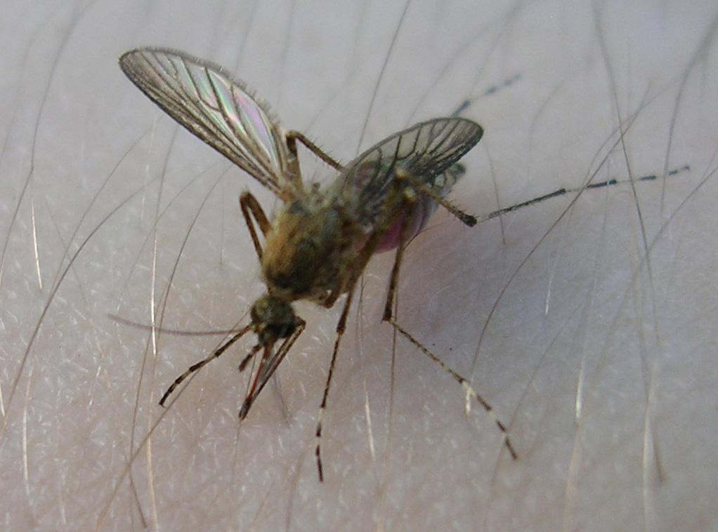 отпугиватель насекомых на дачном участке