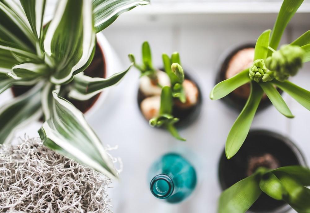 растения 1000 на 700